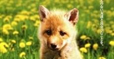 Película Helen the Baby Fox