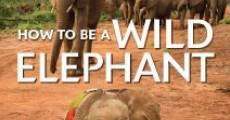 Película How to Be a Wild Elephant