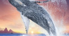 Humpback Whales film complet