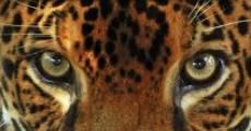 Película Jaguars 3D