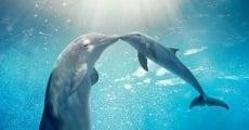 Filme completo La gran aventura de Winter el delfín 2