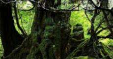 Película La mujer y la selva