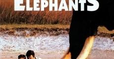 Ver película Fofana y los elefantes