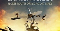 Película Les routes secrètes des oiseaux migrateurs