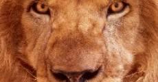 Lion Ark (2013)