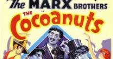 The Cocoanuts film complet