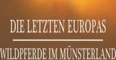 Die letzten Europas Wildpferde im Münsterland (Europe's Last Wild Horses) (2011)