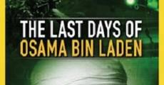 Ver película Los últimos días de Osama Bin Laden