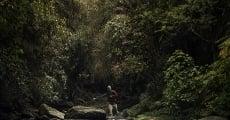 Película Lost in Laos