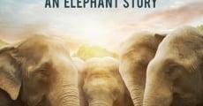 Película Love & Bananas: An Elephant Story