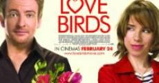 Love Birds streaming