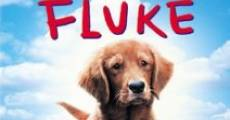 Mi amigo Fluke