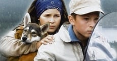 Ver película Mystery of the Wolf