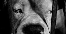 Ver película Nación de los perros