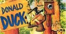 Ver película Pato Donald: La vieja secoya