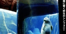Película Penguins in the sky - Asahiyama zoo