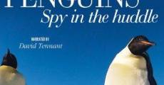 Película Penguins – Spy in the Huddle