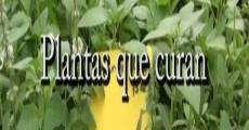 Película Plantas que curan, plantas prohibidas