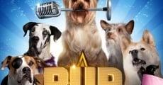 Ver película Pup Star