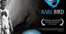 Película Rare Bird