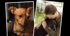 Redemption: The No Kill Revolution in America streaming