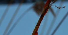 Película Reeds