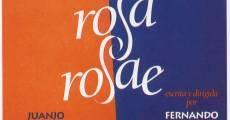 Película Rosa Rosae