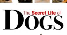 Película La vida secreta de los perros