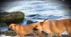Spirit of the Sato: The Journey of Puerto Rico's Lost Dogs (2013) stream