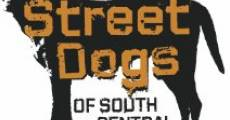 Película Street Dogs of South Central