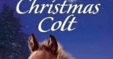 The Christmas Colt (2013) stream