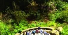 The Grove (2011) stream