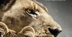 Película The Last Lions