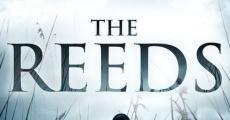 Ver película The Reeds