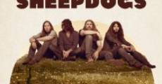 Película The Sheepdogs Have at It