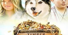 Filme completo Timber the Treasure Dog