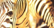 Película Un animal, animales