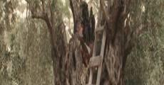 Aühava vegetativit (2012) stream