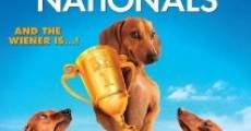 Wiener Dog Nationals (2013)