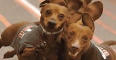 Película Wiener Takes All: A Dogumentary