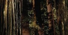 Película Woodshock