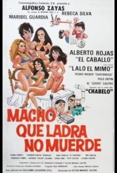 Ver película Macho que ladra no muerde