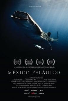 Ver película México pelágico