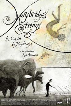 Muybridge's Strings online