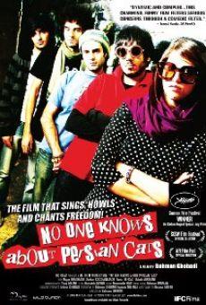 I gatti persiani online