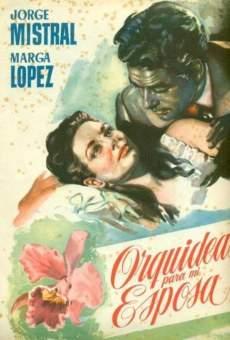 Orquídeas para mi esposa online