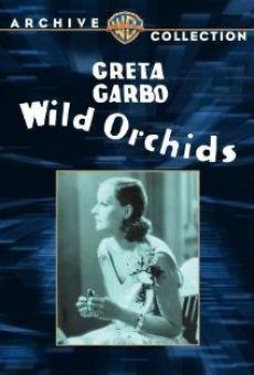 Ver película Orquídeas salvajes