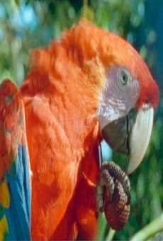 Papageien - Botschafter des Regenwaldes on-line gratuito