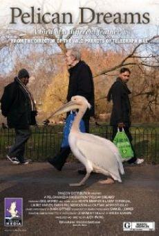 Pelican Dreams online