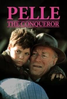 Ver película Pelle el conquistador